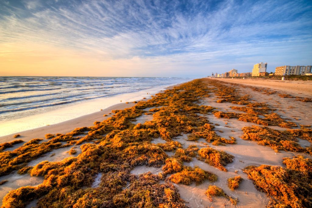 South Padre Isand Beach; Sunrise and Kelp on the Beach with Hotels in Background; CQ Integrative Health Visting Patients