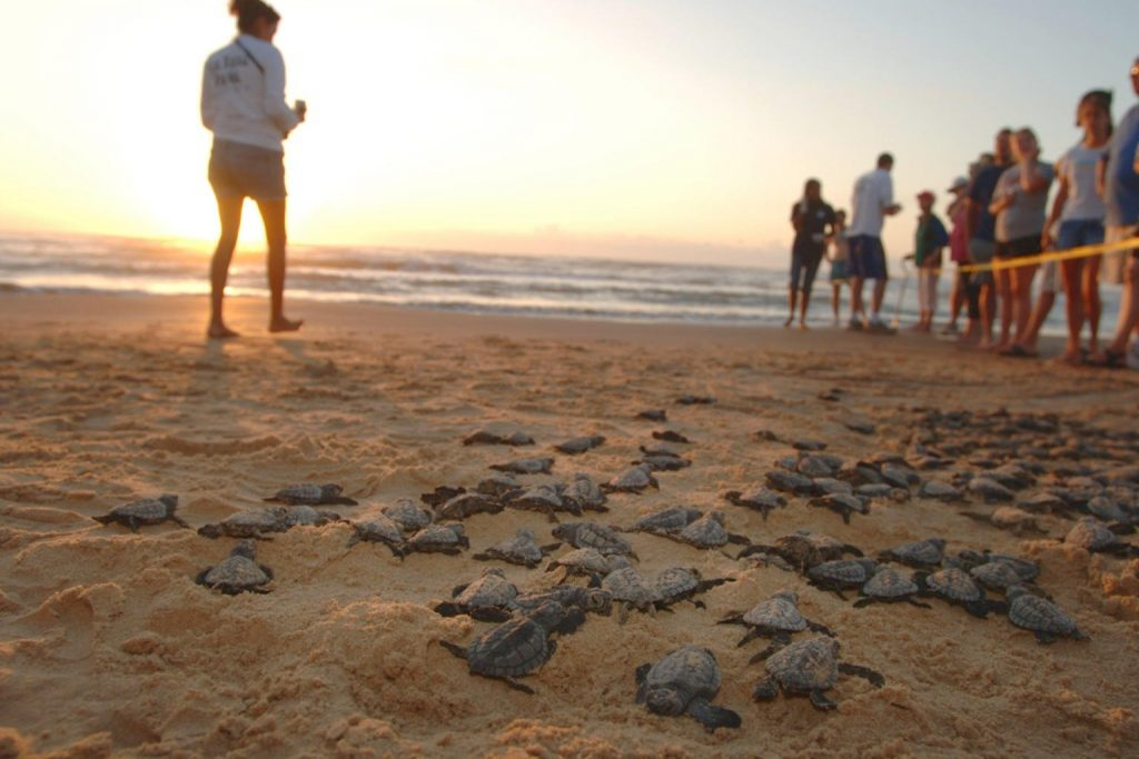 South Texas South Padre Island Turtle Release; 37 minutes from CQ Integrative Health